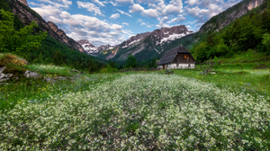 Cottage Flower House Meadow Mountain Spring 4000x2750 Wallpaper