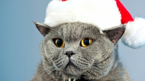 Animal Cat Christmas Pet Santa Hat Yellow Eyes 1920x1200 wallpaper