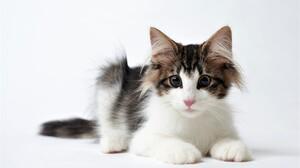 Baby Animal Cute Kitten Pet 2560x1600 Wallpaper