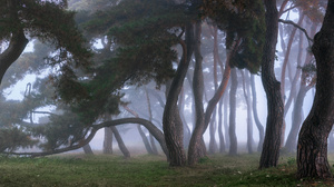 Trees Forest Mist Nature 3000x1496 Wallpaper