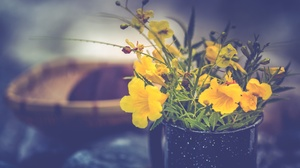 Plants Flowers Yellow Flowers 2048x1365 Wallpaper