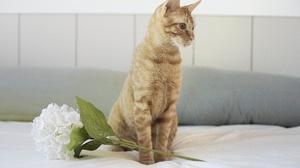 Flower Hydrangea Pet 6000x4000 Wallpaper