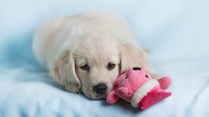 Baby Animal Dog Pet Puppy 1920x1280 Wallpaper