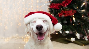 Christmas Ornaments Dog Pet Puppy Santa Hat 2000x1333 Wallpaper