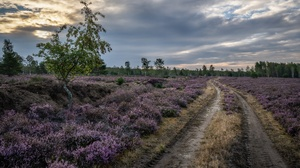 Road Nature Meadow Heather 6002x4003 wallpaper