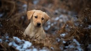 Baby Animal Dog Golden Retriever Pet Puppy 2048x1280 Wallpaper
