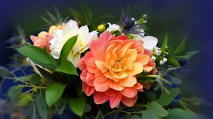Flowers Plants Colorful 2560x1440 Wallpaper