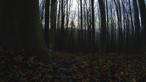 Nature Forest Beech Leaves Fall Ivy Landscape 3840x2160 Wallpaper