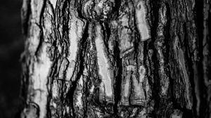 Nature Wood Tree Bark Bark Textured Monochrome Pine Trees Photography 5873x3304 wallpaper
