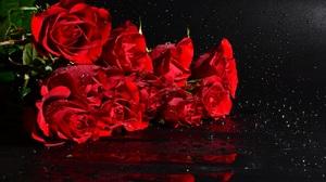 Rose 1920x1266 Wallpaper