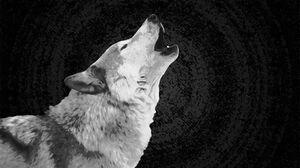 Wolf 2560x1440 Wallpaper
