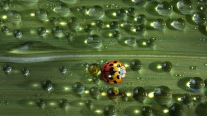 Insect Ladybug Macro Water Drop 2048x1366 Wallpaper