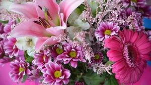 Earth Flower Gerbera Lily Pink Flower Spring 2048x1356 wallpaper