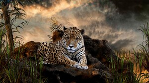 Animals Jaguars Big Cats Nature Mist 1920x1080 Wallpaper