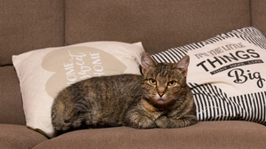 Cat Pet Pillow Sofa 3840x2160 Wallpaper