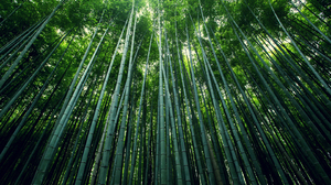 Bamboo Earth Forest Green 2880x1800 Wallpaper