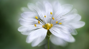 Flower Macro White Flower 2048x1365 Wallpaper