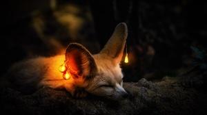 Light Bulb Sleeping Fennec Fox Wildlife 2184x1318 wallpaper