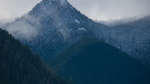 Trees Olympic National Park National Park Forest Nature Mountains Jungle Mist Landscape Winter 1553x2451 wallpaper