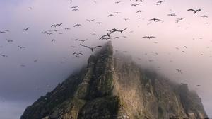 Bird Cliff Flock Of Birds Island Scotland Seagull 3072x2304 Wallpaper