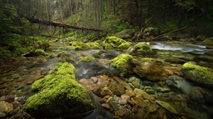Greenery Moss Nature Rock Stone Stream 2048x1366 Wallpaper