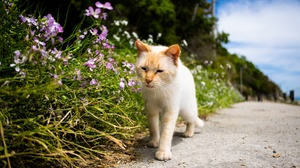 Cat Depth Of Field Pet 2048x1365 wallpaper