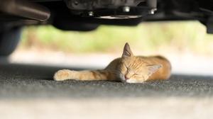 Cat Depth Of Field Pet Sleeping 6000x4000 wallpaper