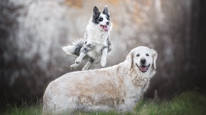 Dog Animals Mammals Outdoors 2048x1365 Wallpaper
