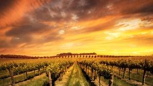 Cloud Landscape Nature Sunset Vineyard 4084x3000 Wallpaper