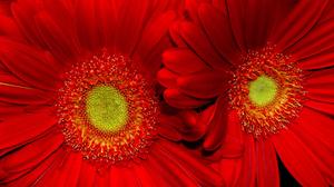 Flower Red Flower 1920x1200 wallpaper