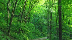 Forest Greenery Road 1920x1200 Wallpaper