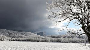 Landscape Snow Field Tree 2000x1333 Wallpaper
