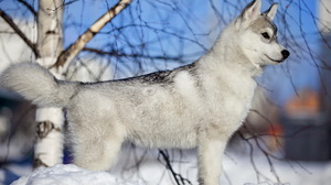 Animal Dog 2560x1600 Wallpaper