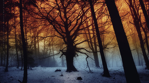 Forest Snow Tree Winter 2560x1600 Wallpaper