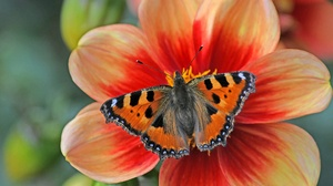 Butterfly Flower Insect Macro 2048x1153 wallpaper
