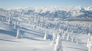 Forest Mountain Snow 2560x1600 Wallpaper