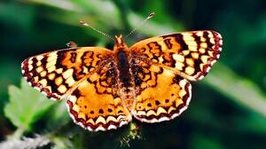 Animal Butterfly 1920x1080 Wallpaper