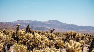 Landscape Nature Desert USA California 4240x2832 Wallpaper