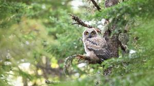 Bird Owl Wildlife 6064x3894 wallpaper