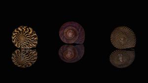 Reflection Shell 2048x1365 Wallpaper