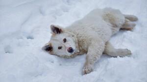 White Lying Down Snow Winter 5202x3468 Wallpaper