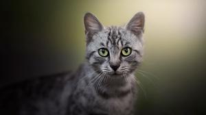 Cat Pet 2048x1367 Wallpaper
