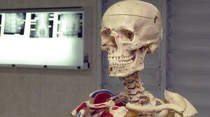 Anatomy Medical Science 3264x1832 Wallpaper