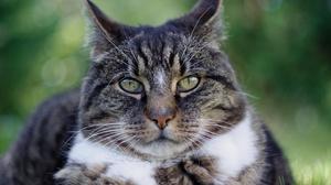 Cat Pet Stare 2880x1913 Wallpaper