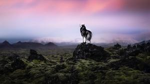 Dog Husky Pet 2048x1365 Wallpaper