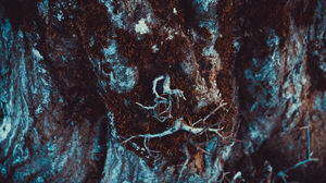 Nature Moss Tree Bark Tree Stump Red Cold Landscape Photography 5874x3916 Wallpaper