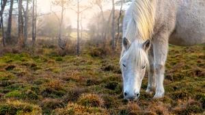 Animal Horse 2000x1335 wallpaper