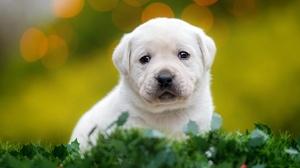 Dog Puppy Pet Baby Animal 2048x1365 Wallpaper