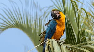 Bird Blue And Yellow Macaw Macaw Parrot 4110x3381 wallpaper