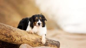 Dog Pet Depth Of Field 2048x1269 Wallpaper